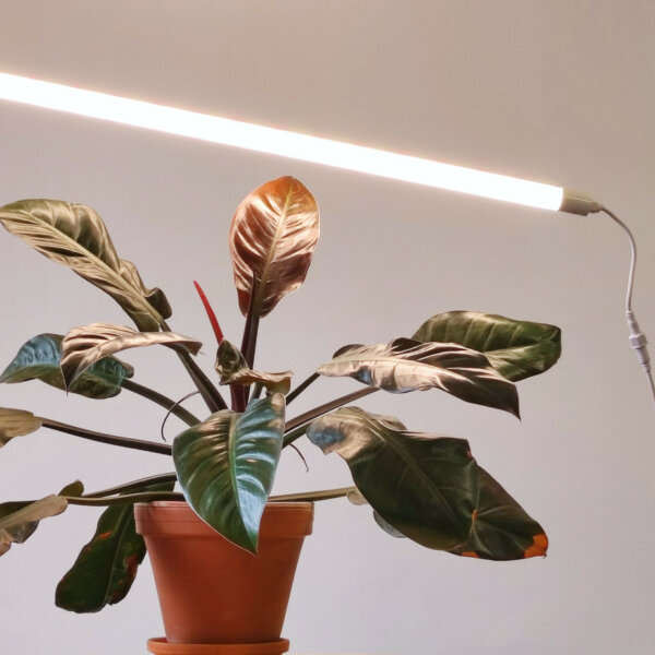lampa led do uprawy roślin